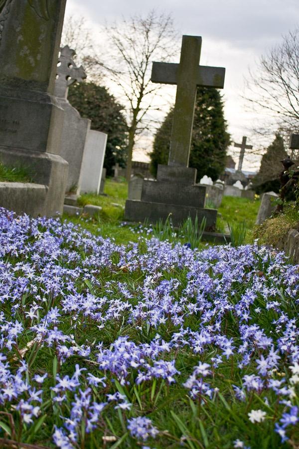 Brompton Cemetery, immediately next to Stamford Bridge, the stadium where Chelsea Football Club play