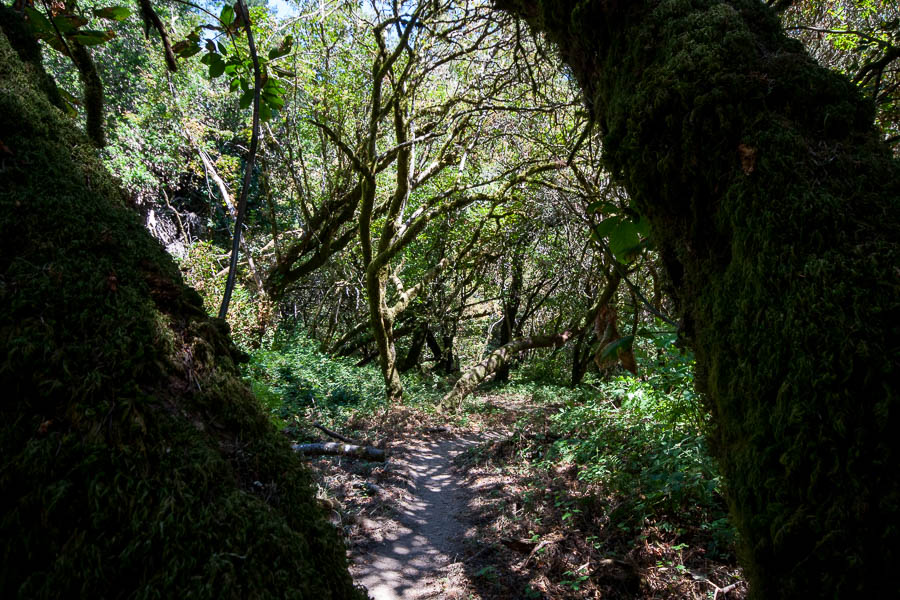 West Waddell Creek State Wilderness
