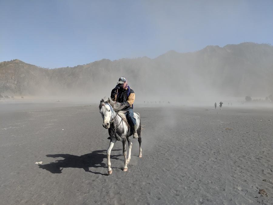Horse on sea of sand near Mount Bromo