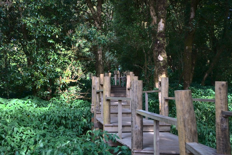 Wooded Top of Doi Inthanon