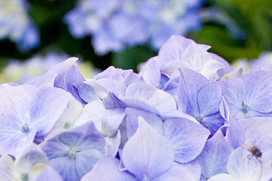 Flowers in Wales