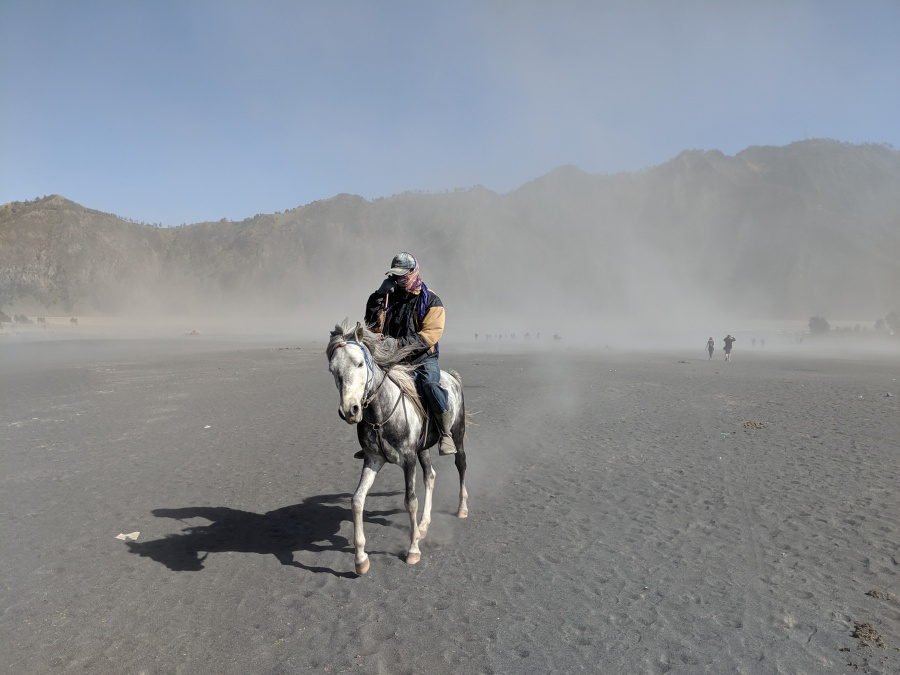 Horse on sea of sand near Mount Bromo